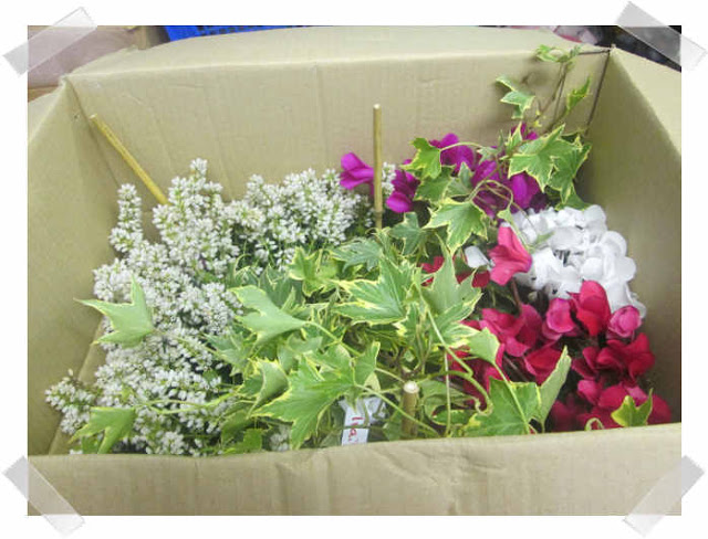 gardening express review shell louise ForGardening Express Reviews