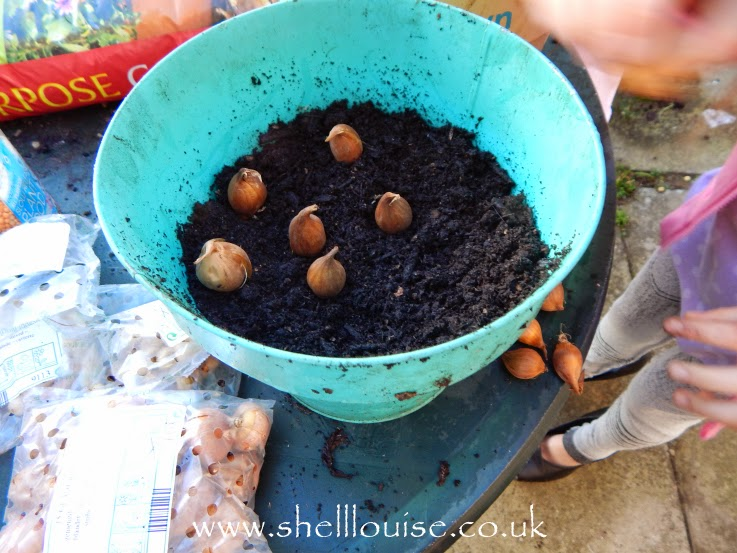 summer bulbs in the pot