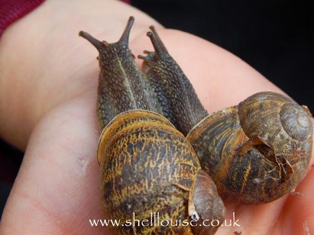 Snails on Ella's hand