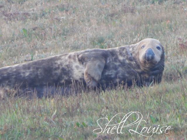 Donna Nook Nature Reserve - Seal