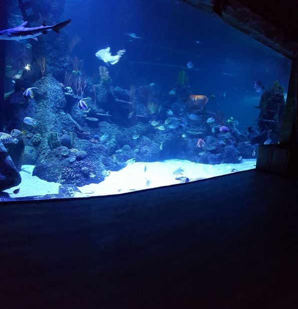 skegness-aquarium-012