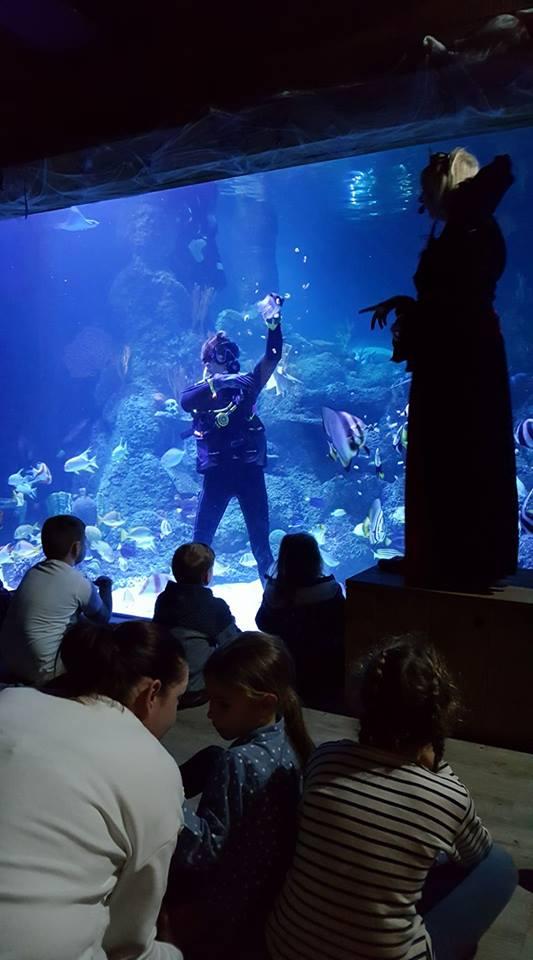 skegness-aquarium-016
