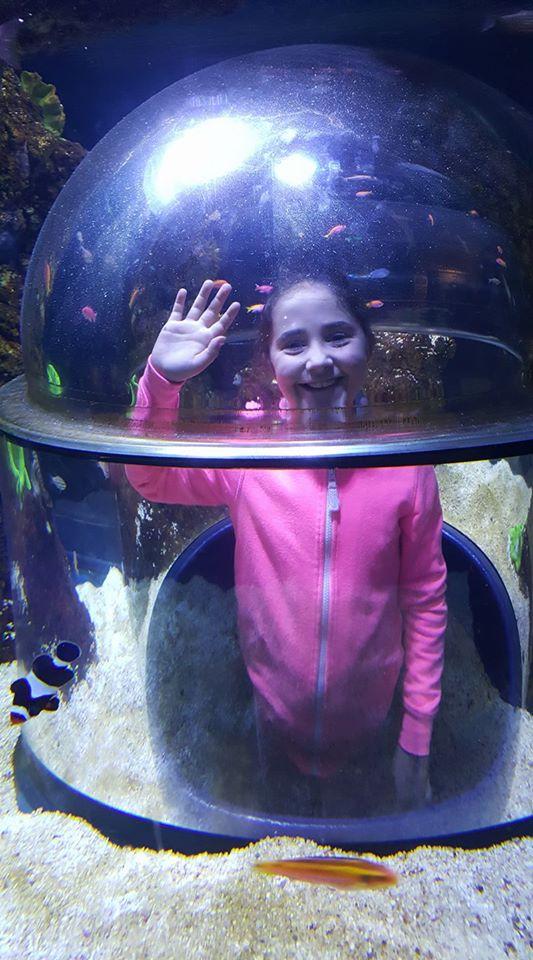 skegness-aquarium-04