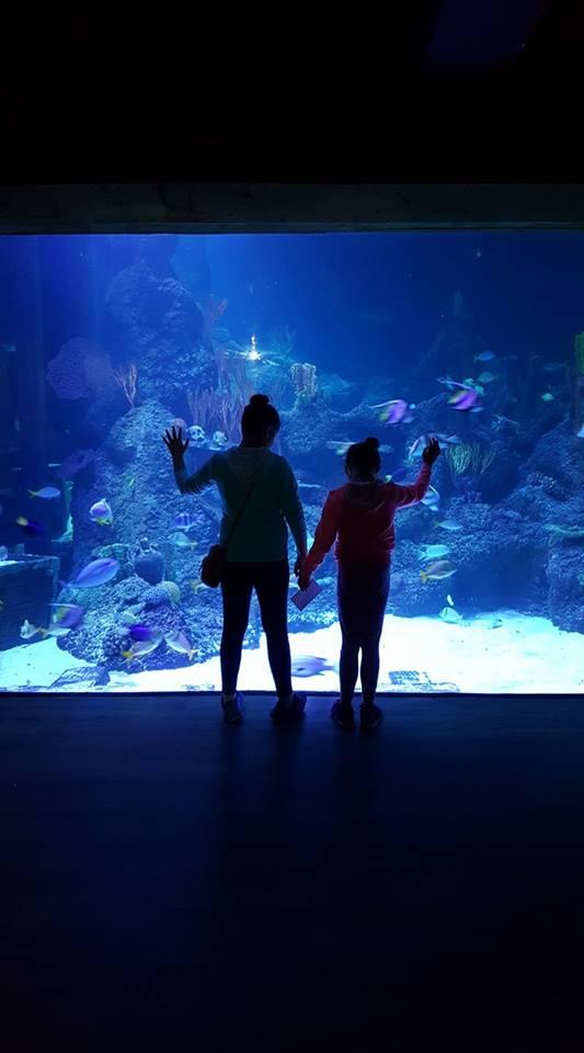 skegness-aquarium-08