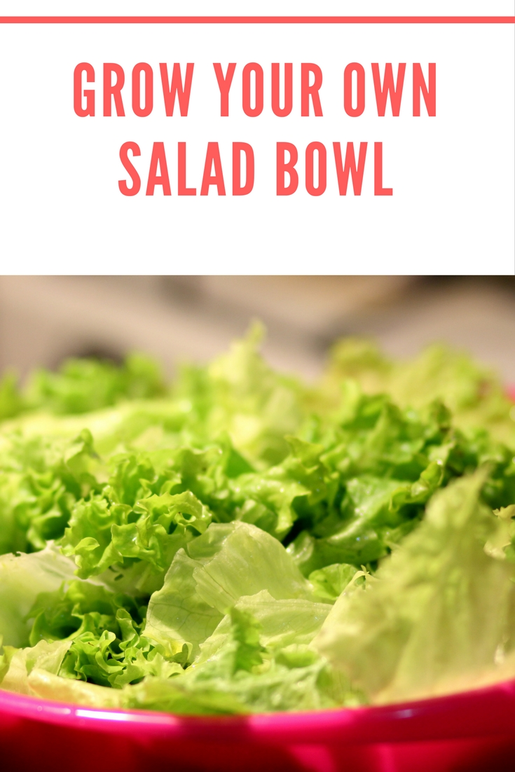 grow your own salad bowl
