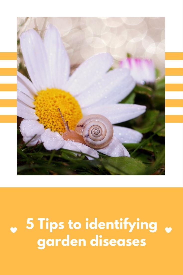 Identify garden diseases