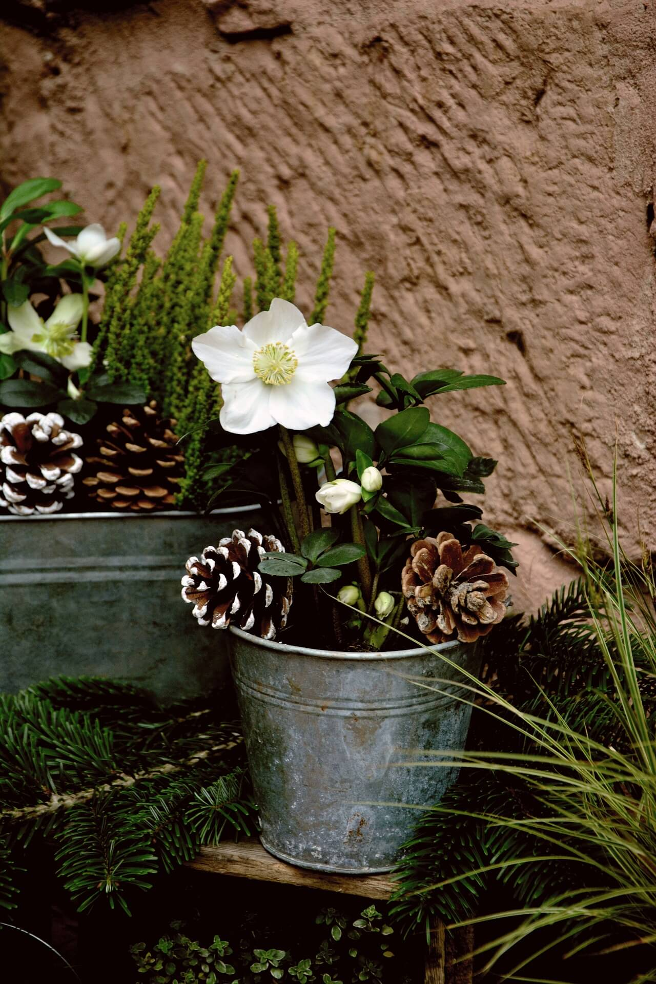 Winter flowers container
