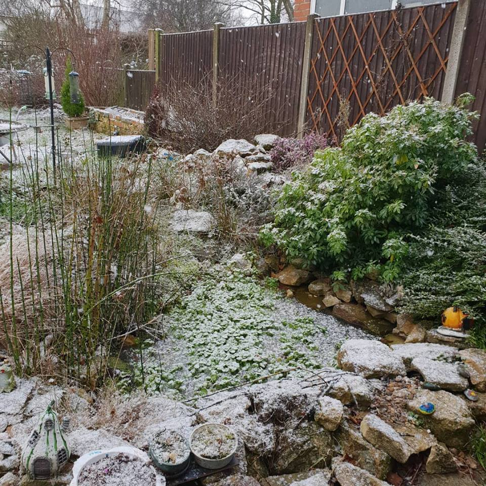 February 2019 1 day 12 pics 01 - snowing, finally!