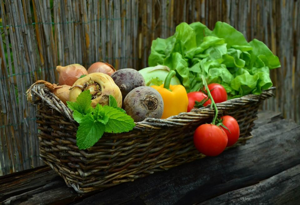 gardening projects - homegrown vegetables