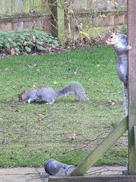 squirrels in the garden